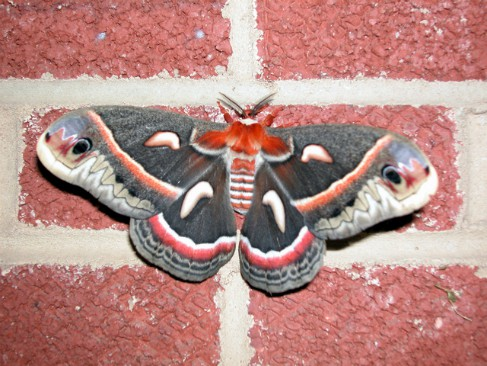 Fantasy story about moths...