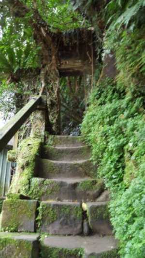 Steps in Shiding—Ned Marcus